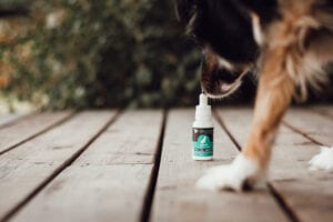 Bozeman photographer brand shoot for cbd oil for pets with mini Aussie